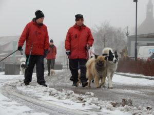 Promenad med hundar